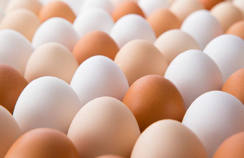 卵の種類あれこれ