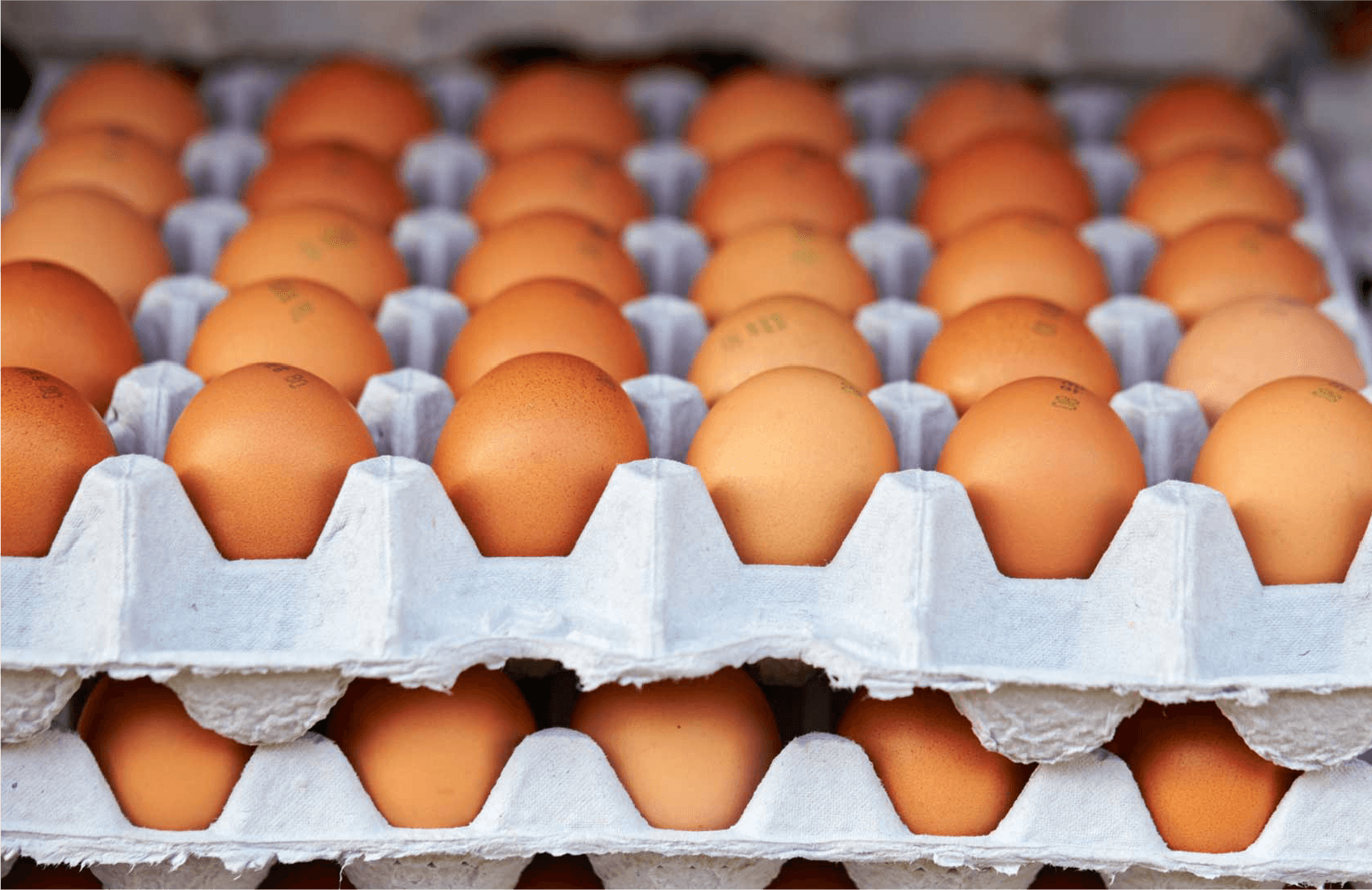 鶏卵を大切に受け取ります!